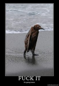 penguin covered with oil walking on a beach