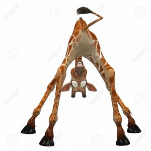 giraffe bent over looking through its legs